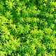 Green decorative grass background - PhotoDune Item for Sale