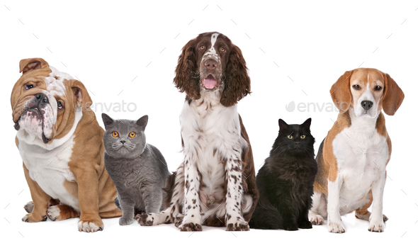 cats and dogs - Stock Photo - Images