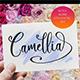 Camellia Script - GraphicRiver Item for Sale