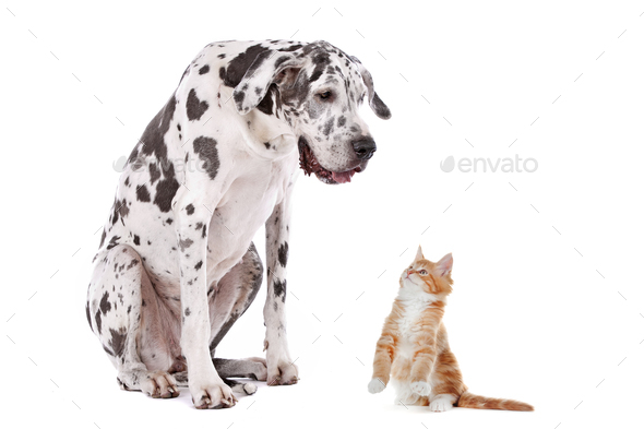 A dog and a cat - Stock Photo - Images