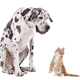A dog and a cat - PhotoDune Item for Sale