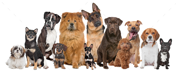 Group of twelve dogs - Stock Photo - Images