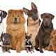 Group of twelve dogs - PhotoDune Item for Sale