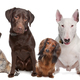 Group of dogs  - PhotoDune Item for Sale