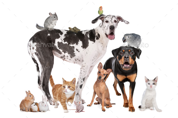 Group of Dogs, cats, birds,mammals and reptiles - Stock Photo - Images