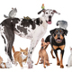 Group of Dogs, cats, birds,mammals and reptiles - PhotoDune Item for Sale