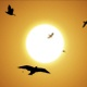 Seagull Flies Into The Sky Towards The Sun (2-pack) - VideoHive Item for Sale