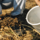 Soil Fertility Analysis. Female Agronomist Taking Soil Samples - PhotoDune Item for Sale