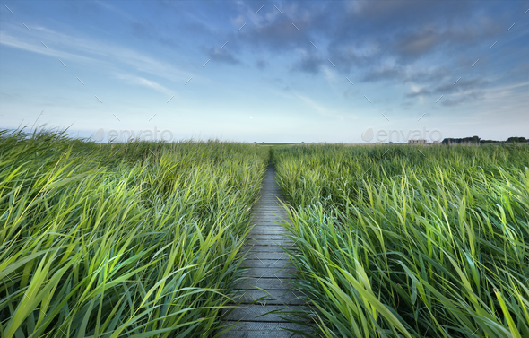 wooden path between high green grass and blue sky - Stock Photo - Images