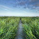 wooden path between high green grass and blue sky - PhotoDune Item for Sale