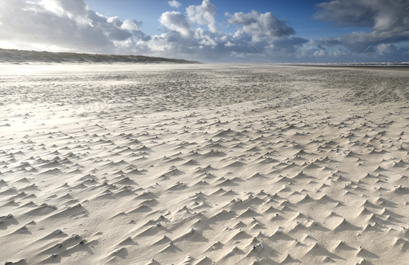 mollusk shells on windy sand beach - Stock Photo - Images