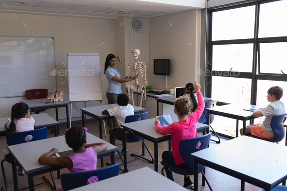 Female teacher explaining skeleton parts to schoolkids in classroom - Stock Photo - Images