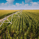 Drone photography, aerial view of irrigation system in cornfield - PhotoDune Item for Sale