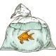 Goldfish in a Plastic Bag - GraphicRiver Item for Sale