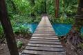 Jungle in Costa Rica - PhotoDune Item for Sale