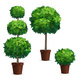 Set of Topiary Trees or Shrub in a Pot - GraphicRiver Item for Sale