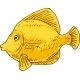 Yellow Tang Zebrasoma Fish - GraphicRiver Item for Sale