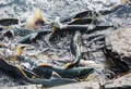 Spawning salmon - PhotoDune Item for Sale