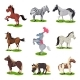 Flat Vector Set of Different Horses - GraphicRiver Item for Sale