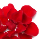 Red rose petals on white - PhotoDune Item for Sale
