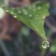 Leaf Droplet Crown - VideoHive Item for Sale