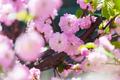 Blossom almond - PhotoDune Item for Sale
