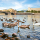 Birds on riverbank in Prague - PhotoDune Item for Sale