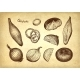 Ink Sketch of Onion - GraphicRiver Item for Sale