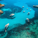 Boats and luxury yachts in transparent sea at sunny day. Aerial - PhotoDune Item for Sale