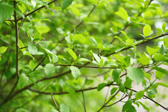 Green leaves in springtime. Shallow depth of field - Stock Photo - Images