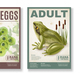 Frog Life Cycle Posters Set - GraphicRiver Item for Sale