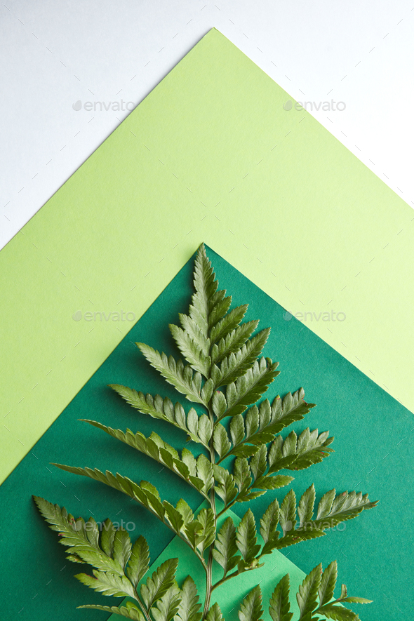Fern leaf on a multi-colored green cardboard around a gray background with copy space. Natural - Stock Photo - Images