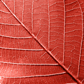 Macro photo of natural pattern of leaf with veins. Creative background for your ideas in a color of - PhotoDune Item for Sale