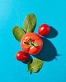 Fresh spinach leaves and juicy ripe tomatoes on a blue background with hard shadows and copy space - PhotoDune Item for Sale