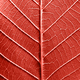 Macro photo of the back side of leaf with veins. Leafy natural pattern in a color of the year 2019 - PhotoDune Item for Sale