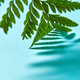 Macro photo green fern leaf with shadow pattern on blue background with copy space. Natural - PhotoDune Item for Sale