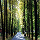 Empty Alley of The City Autumn Park - VideoHive Item for Sale