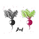 Hand Drawn Sketch of Beet - GraphicRiver Item for Sale