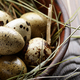 Fresh organic quail eggs in clay plate on wooden rustic kitchen - PhotoDune Item for Sale