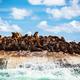 Wild sea lions on the island - PhotoDune Item for Sale