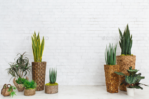 Succulents in DIY pots in scandinavian style home - Stock Photo - Images