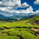 Tea plantations and river in hills, Kerala, India - PhotoDune Item for Sale