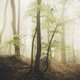 Surreal autumn forest with fog - PhotoDune Item for Sale