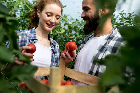 Two young people working in greenhouse - Stock Photo - Images