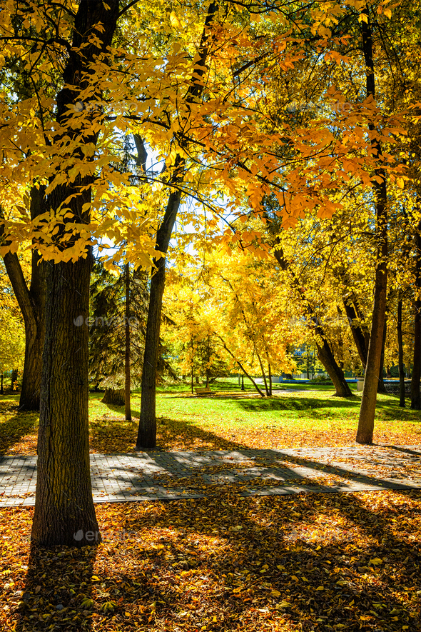 Autumn in park - Stock Photo - Images