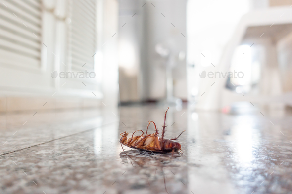Dead cockroach on floor - Stock Photo - Images