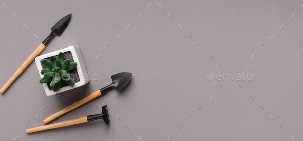 Succulent plant in pot and mini gardening tools on table - Stock Photo - Images