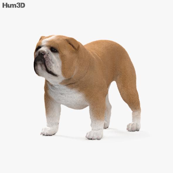 Bulldog HD