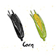 Hand Drawn Sketch of Corn - GraphicRiver Item for Sale