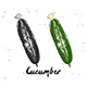 Hand Drawn Sketch Of Cucumber - GraphicRiver Item for Sale
